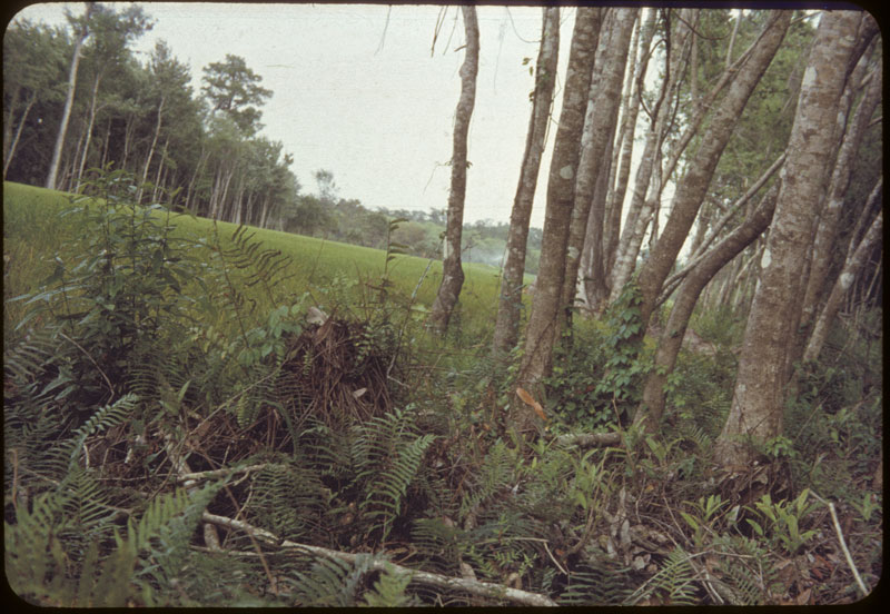 Rough Swamp Rough
