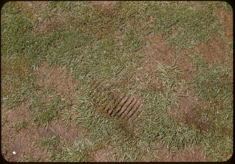 Cleat mark forbidden golf shoe - Fert. burn