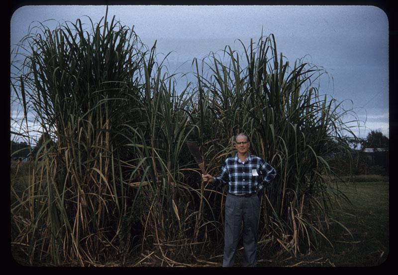 Graham and sugar cane