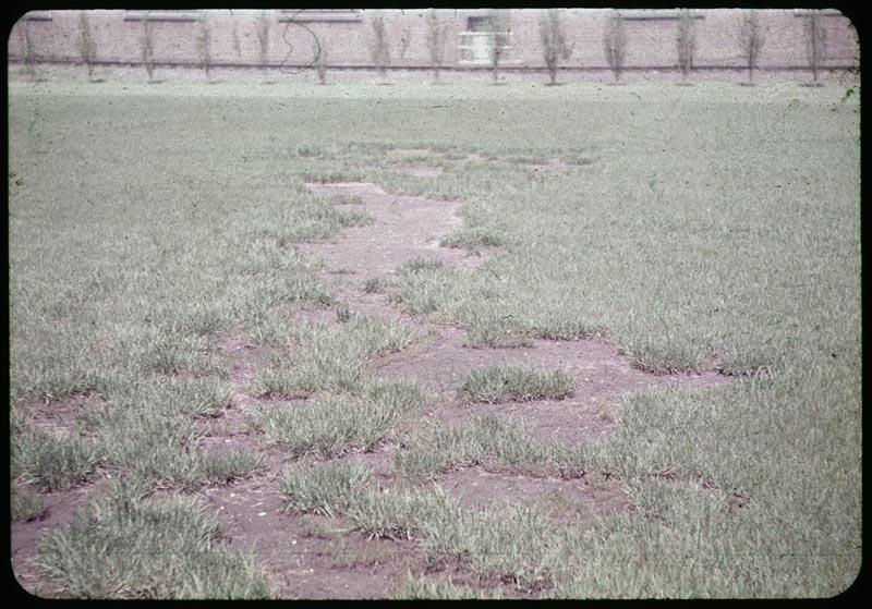 Grass failure where Ferric Chloride spilled - seeded 3x