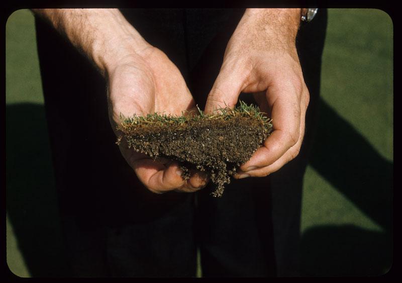 Soil Profile on new green