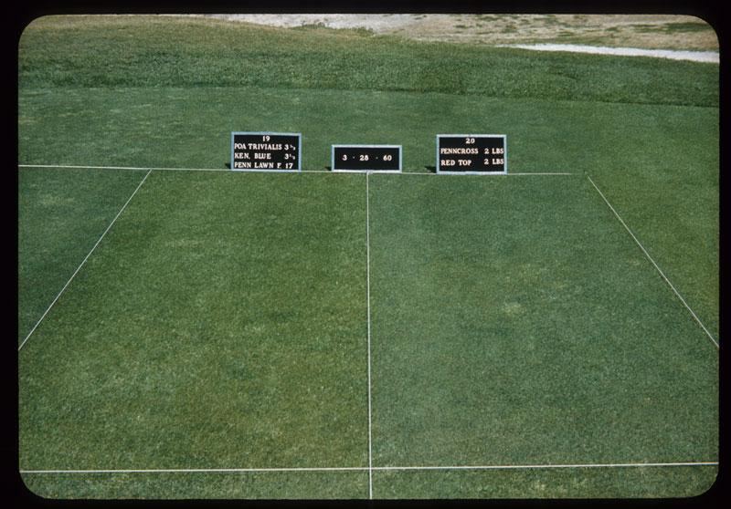 Triv.K.Blue,PennF,vs.Penncross & Redtop