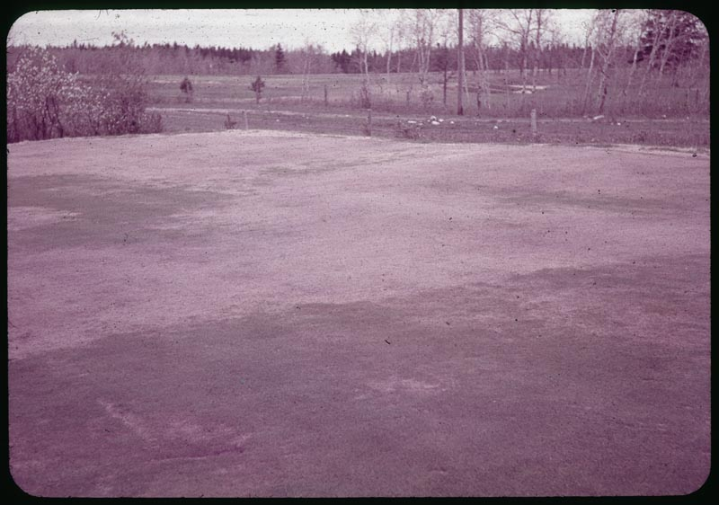 Desiccation injury to green