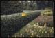 Thumbnail: Flower Garden Jap. bettle trap