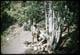 Thumbnail: Tom Johnston Drinks from Spring Fountain