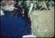 Thumbnail: Edge of Lake Dye Treated Pond