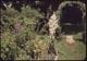 Thumbnail: Yucca Plant