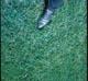 Thumbnail: 7 Acre Lawn -- 1 TN/A/YR Milorganite June-Aug-Dec