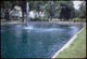 Thumbnail: Dog Frolics in Aquashade Pond