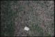 Thumbnail: Rhodes Grass Scale near #18 T