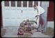 Thumbnail: Lambert - stolon cotter