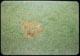 Thumbnail: Brown Patch Scar