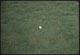 Thumbnail: Blue Grass F