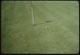 Thumbnail: Bent grass G