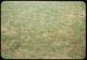Thumbnail: Dry Poa Annua F