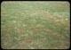 Thumbnail: Dry Poa Annua F Footprints show