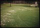 Thumbnail: Snowmold on untreated apron only
