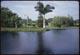 Thumbnail: Lake Wilson (Norfolk Pine)