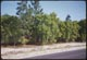 Thumbnail: Pines & Black Jack Oak