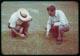 Thumbnail: PMAS on Crabgrass