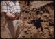 Thumbnail: Rotted sawdust compost close-up