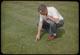 Thumbnail: Poa in Aerifier holes