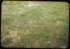 Thumbnail: New Seeding Following 1-wk. after Sod. Ars. 4oz./1000