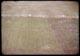 Thumbnail: Poa Triv. - Zaun Mix. - f-74 over-seeding