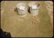 Thumbnail: Coarse chopped & coarse shredded stolons