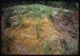 Thumbnail: Compost Pile chickweed kill 2,4-D