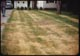 Thumbnail: PMAS injured lawn at excessive rate