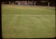 Thumbnail: Greener grass in aerified plot
