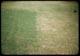 Thumbnail: Fertilizer makes Poa bigger & better