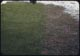 Thumbnail: Mil 40#/1000 Spr. & Fall  Good Turf otherwise crabgrass