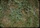 Thumbnail: 2-73 seedling spread in one season