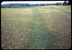 Thumbnail: Manure brings clover Rorotilled strips on sidehill