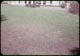 Thumbnail: Jap Beetle grub injury on grass