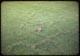 Thumbnail: Mole run in F