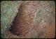 Thumbnail: Tree Roots #10 Pocket G