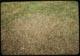 Thumbnail: Milars. kills clover 400#/A