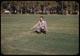 Thumbnail: Milorg. at 40#/100 no chlorosis    Wilson