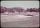 Thumbnail: Sea water injury to green
