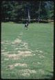 Thumbnail: Plot #3 BALAN- fall only 2x injures turf foreground - CA. ARS. injury appl. 2x - 1970