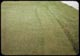 Thumbnail: Mowed strip after raking out surplus bent