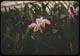 Thumbnail: Orchids