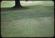 Thumbnail: Tree roots thin out grass