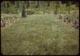 Thumbnail: Buffalo grass lawn