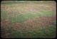 Thumbnail: Milars. 7#/1000 kills Poa & clover  bent survives