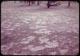 Thumbnail: Snowmold K, Bluegrass F