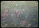 Thumbnail: Snowmold active spots